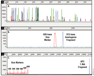 Analysis of DNA purified from paraffin-embedded, formalin-fixed 10µm thin sections using the MagneSil® Genomic, Fixed Tissue System.