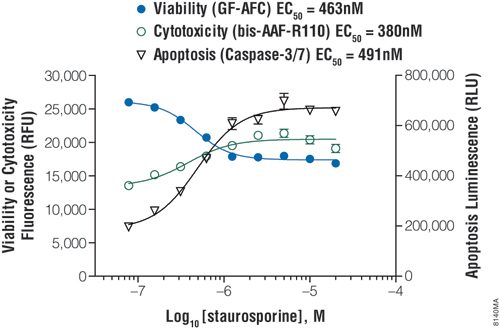 Apoptosis results using the ApoTox-Glo Triplex Assay protocol.